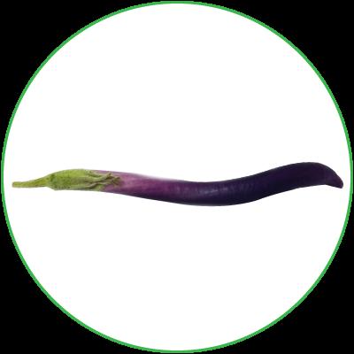 Eggplant Olivia