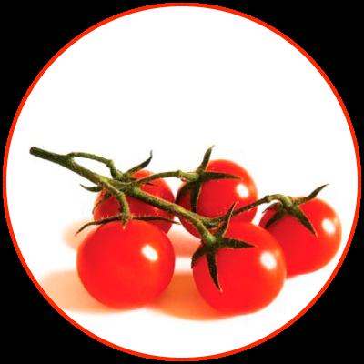 Tomato of Pachino IGP/PGI